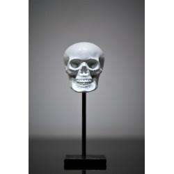 Crâne en béton